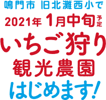 鳴門市 旧北灘西小で2021年1月9日(土) いちご狩り観光農家はじめます!